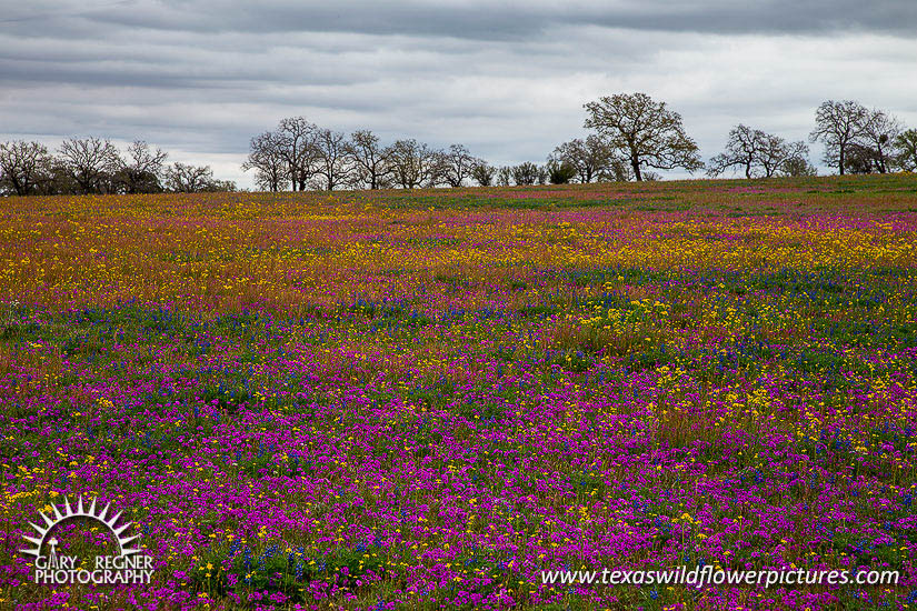Splash of Color Texas Splash of Color
